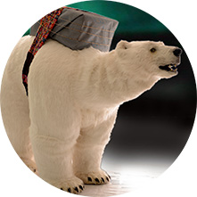 Polar-bear-show-world variety